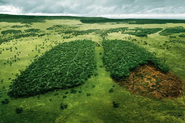 cuttingforest